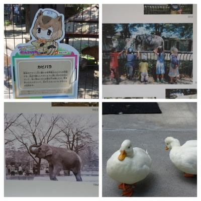 2017初秋の井の頭公園~象のはな子写真展