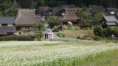 美山かやぶきの里(1) 白いソバの花とかやぶきの集落。