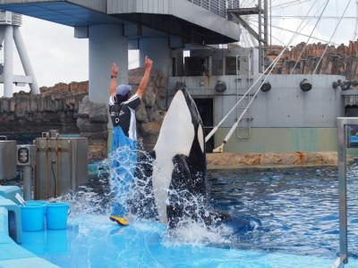 シャチ(オルカ)に会いたい!青春18きっぷで行く名古屋水族館♡熱田神宮・あつた蓬莱軒も今回は行けました。