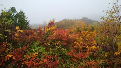 雨の栗駒高原散策