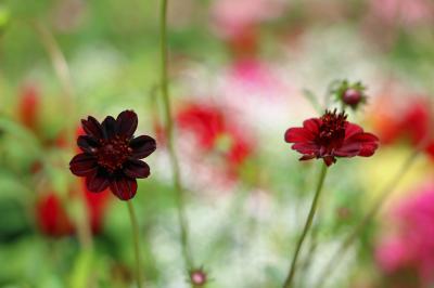 里山ガーデン、秋の大花壇・・・