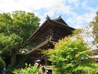 鎌倉散歩 寿福寺-英勝寺-海蔵寺-小町通り