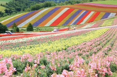 夏のカラフル北海道 (4)花と緑に溢れた美瑛と青さが増した青い池