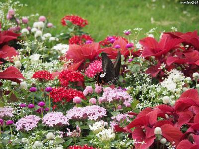 秋の大花壇@里山ガーデン