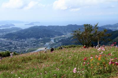 鷲ヶ峰コスモスパークのコスモスから生石高原のすすきを見てから、和泉リサイクル環境公園のコスモス。