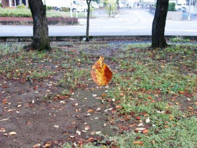 初秋の佇まいを感じながら早朝ウォーキングコースを歩く