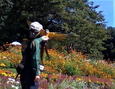 秋の里山ガーデン 春と比べて・・バードショーも見ました。