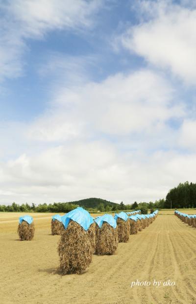 夏のカラフル北海道 (6)富良野 ニオのある風景と満開の花畑