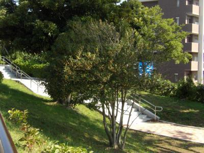 秋の本郷台四丁目第二公園