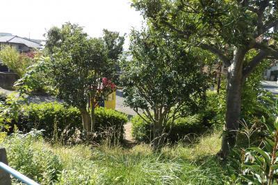 本郷台滝の前公園にも金木犀が