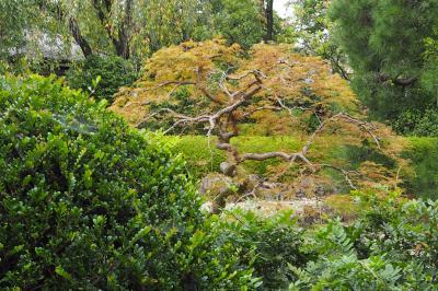 中院 星野山無量寿寺仏地院 川越の中の静寂のお寺さん 木々の美しさ