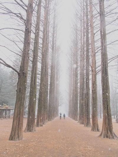 2014韓国2日目 初雪の南怡島(ナミソム)へ