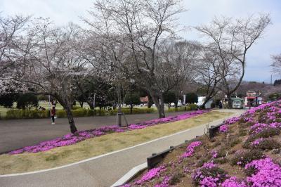 自転車でGO! 2017.04.05 =春を探しに岩本山公園に…=