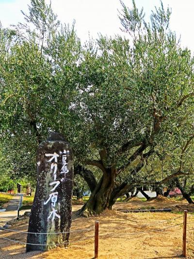 小豆島-2   小豆島オリーブ園 日本最古のオリーブ原木100歳か ☆ギリシャ風車の丘にも