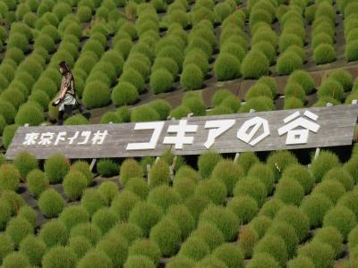 東京ドイツ村 緑のもこもこコキア 濃溝の滝