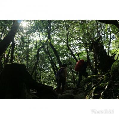 【屋久島】木霊に会いたくて、まさかの2人旅で出発となりました!