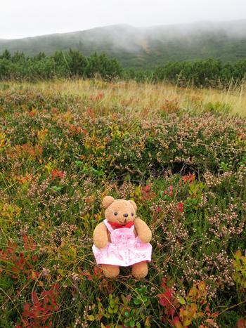 ポーランドの山岳リゾート ザコパネ(3)視界ゼロの大カスプロヴィ山で紅葉を愛でる