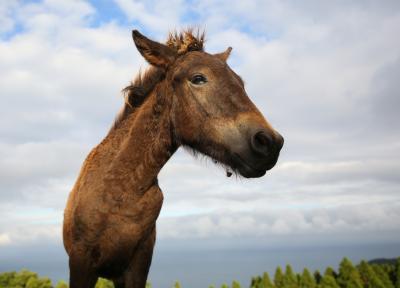 """JAL""""どこかにマイル""""で都井岬の野生馬に会いに行く。(2歳8ヶ月子連れ)"""