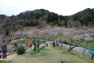 金熊寺(きんゆうじ)梅林