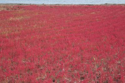 10月上旬の道東~サロマ湖&能取湖のサンゴ草etc