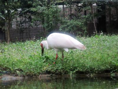 初めての佐渡島大自然と歴史を訪ねて1(船旅とトキご対面)