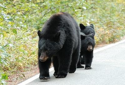 カナディアンロッキーの美景 クマの存在(コンソレイション レイクス ~ カナナスキス インディファティガブル)