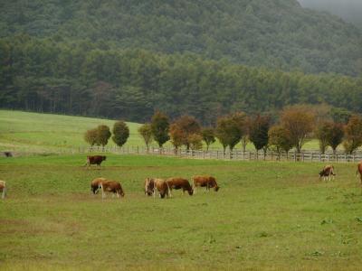 雨の蒜山高原で休息