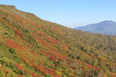日本一早い紅葉を求めて北海道へ(旭岳、赤岳・銀泉台、黒岳、ついでに能取湖サンゴ草群生地などを回ってみました)