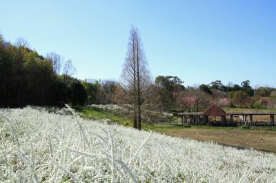 蜻蛉池公園の花々。和泉リサイクル環境公園の菜の花。