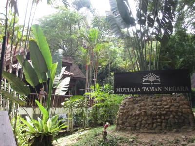 世界最古の熱帯雨林・タマンネガラ国立公園7日間 ~どうでしょう藩士の一人旅①~