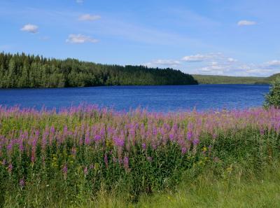 2017.8 22回目のフィンランド旅行9-4~5日目奥さんの手料理,ラヌア村の美しい川と湖