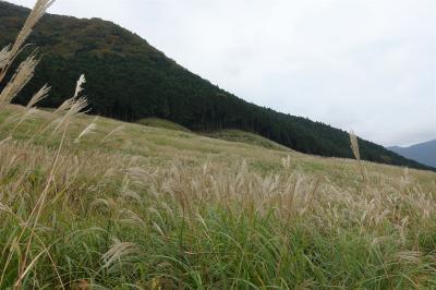 紅葉少し前の箱根と仙石原のススキ