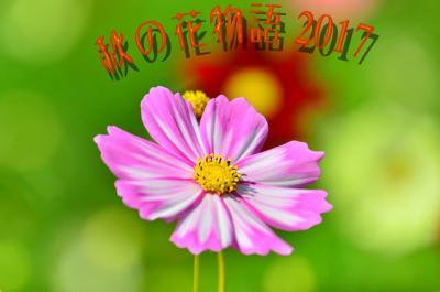 開園30周年.木曽三川公園センターにて「秋の花物語」