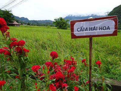 オジン一人ベトナム・ホアビン省マイチャウへ