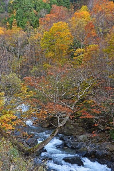 好天に恵まれた紅葉巡り&温泉(1)-奈良俣ダム・照葉峡ー