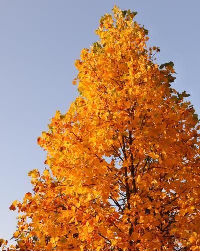 フルーツの丘の紅葉がいい感じ(11月1日・4-3)