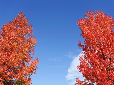 フルーツの丘の紅葉がいい感じ(11月1日・4-4)