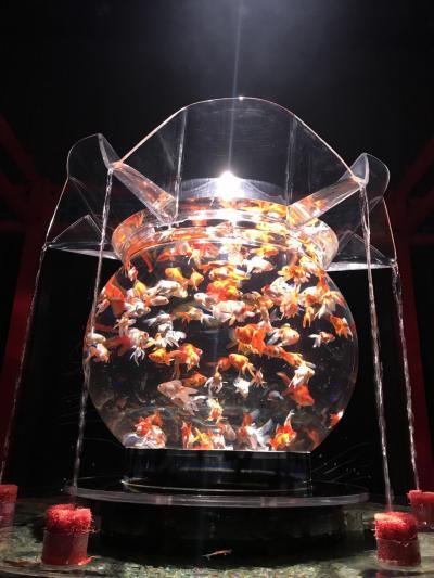 201709-01_コレド室町のアクアリウムに行ってきました Aquarium in KOREDO Muromachi
