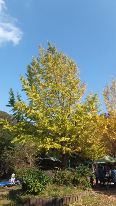 横浜市立金沢自然公園に行きました。紅葉は、まだまだでした・・・。