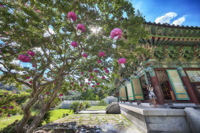 桃色のヒーリングスポット!和順・萬淵寺(マンヨンサ)