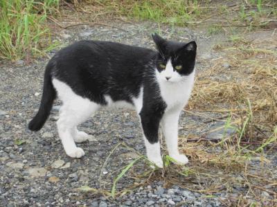 【猫鐡12】藍島・志賀島・島浦島編