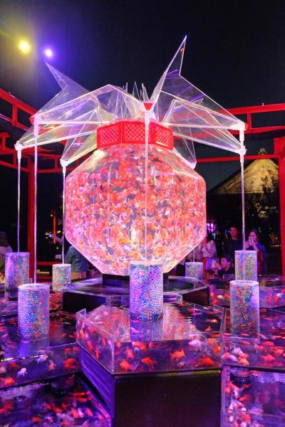 『アートアクアリウム城~京都・金魚の舞~』を見に二条城へ・・・