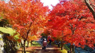 兵庫県で一足早く紅葉見学に出かけてきました