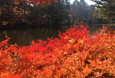 紅葉深まる軽井沢、嬬恋村、草津を巡る1泊2日