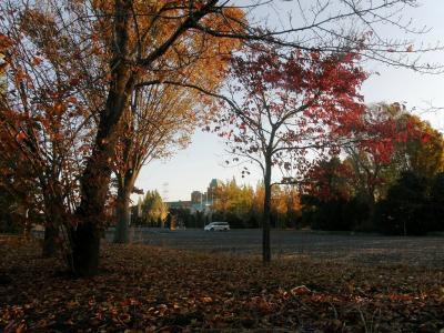 今朝の早朝ウォーキングは加須市にある花崎水上公園まで秋を感じながら往復歩きます・・・①自宅から花崎水上公園まで秋を拾いながら歩く