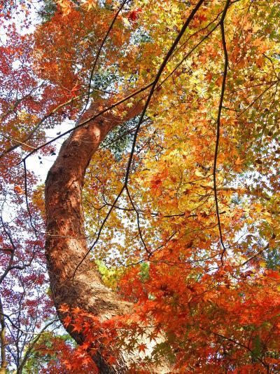 今年も、太閤さんの愛でた紅葉を見に、有馬へ行って来ました!