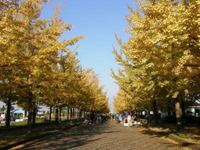 今朝の早朝ウォーキングは加須市にある花崎水上公園まで秋を感じながら往復歩きます・・・②加須市の花崎水上公園を秋を感じながら楽しむ。