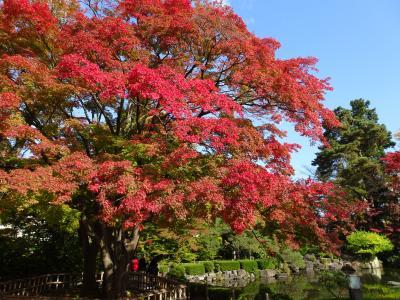 山形, 上杉神社~山寺へ  紅葉と米沢牛のお店