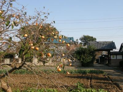 今朝の早朝ウォーキングは加須市にある花崎水上公園まで秋を感じながら往復歩きます・・・③帰路はコースを変えて秋を拾いながら自宅まで歩く