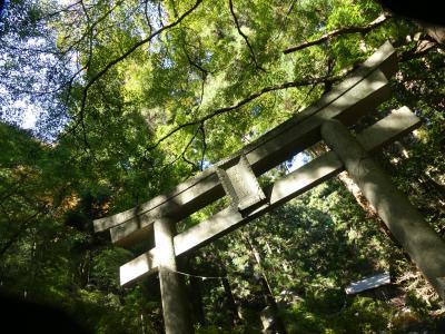 名草厳島神社の紅葉_2017_まだ早すぎて紅葉していません。(栃木県・足利市)